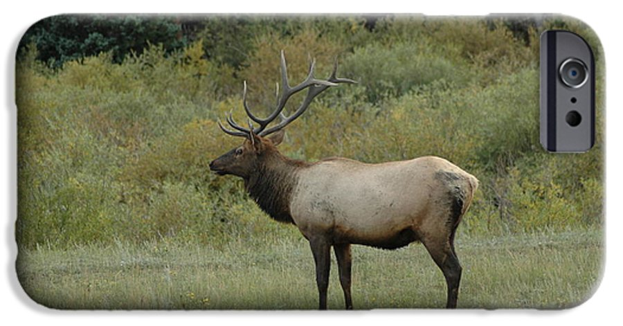 Elk IPhone 6 Case featuring the photograph Elk by Kathy Schumann