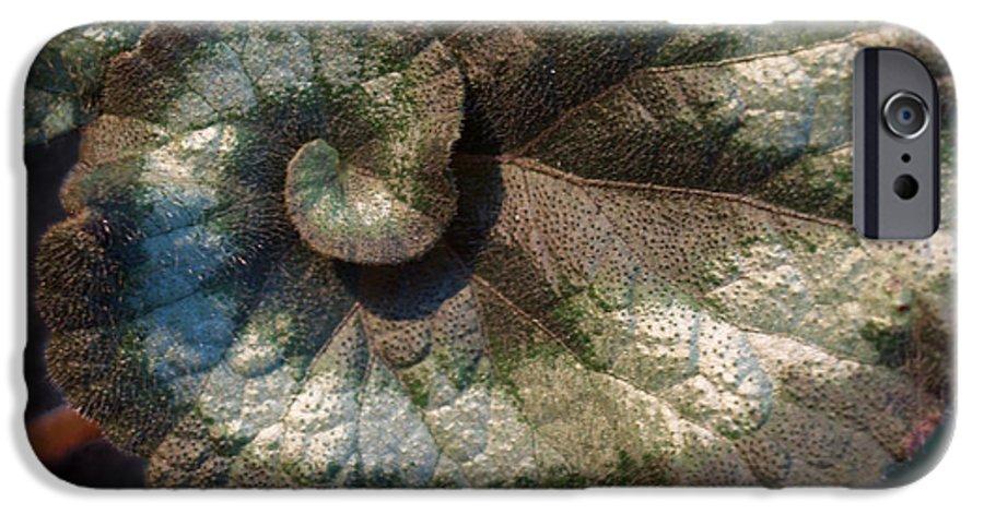 Escargot IPhone 6 Case featuring the photograph Escargot Begonia by Anna Lisa Yoder