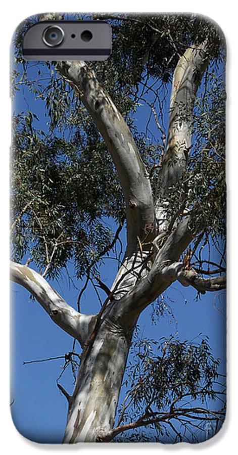 Trees IPhone 6 Case featuring the photograph Eucalyptus by Kathy McClure