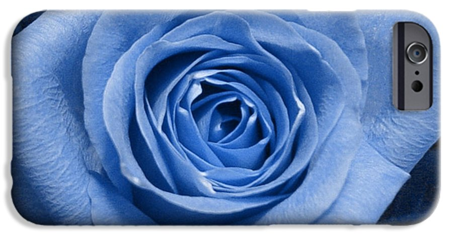 Rose IPhone 6 Case featuring the photograph Eye Wide Open by Shelley Jones