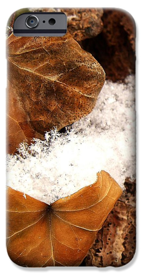 Fall IPhone 6 Case featuring the photograph Fall And Winter by Gaby Swanson