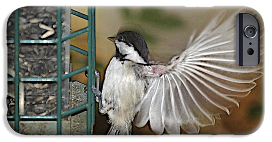 Chickadee In Flight IPhone 6 Case featuring the photograph Fan Dance by Faith Harron Boudreau