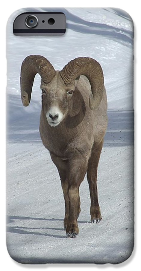 Bighorn Sheep IPhone 6 Case featuring the photograph Farewell To The King by Tiffany Vest