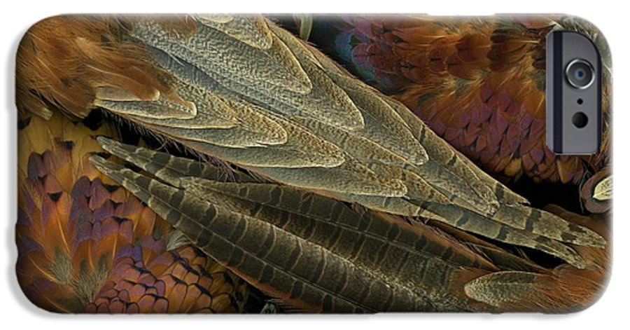 Pheasant IPhone 6 Case featuring the photograph Featherdance by Christian Slanec
