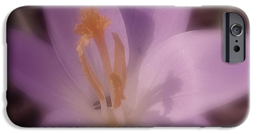 Crocus IPhone 6 Case featuring the photograph First Flower Of Spring by Kenneth Krolikowski