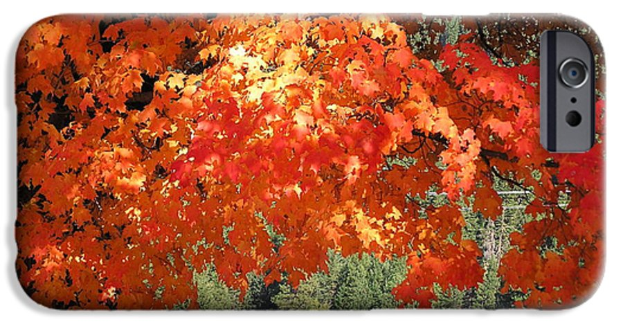 Autumn Photographs IPhone 6 Case featuring the photograph Flickering Sunlight by Louise Magno