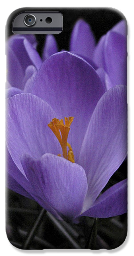 Flowers IPhone 6 Case featuring the photograph Flower Crocus by Nancy Griswold