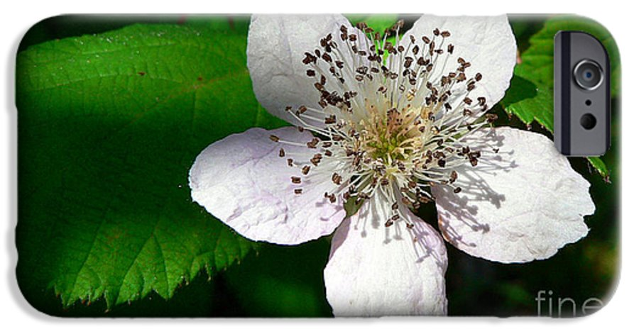 Flower IPhone 6 Case featuring the photograph Flower In Shadow by Larry Keahey