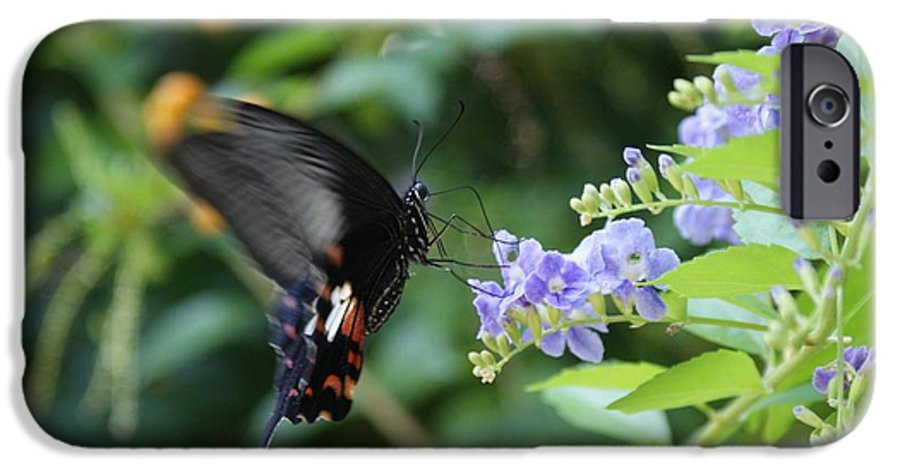 Butterfly IPhone 6 Case featuring the photograph Fly In Butterfly by Shelley Jones