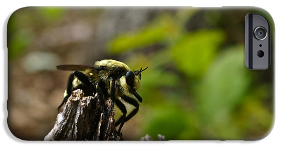 Fly IPhone 6 Case featuring the photograph Fly On Mountain by Douglas Barnett