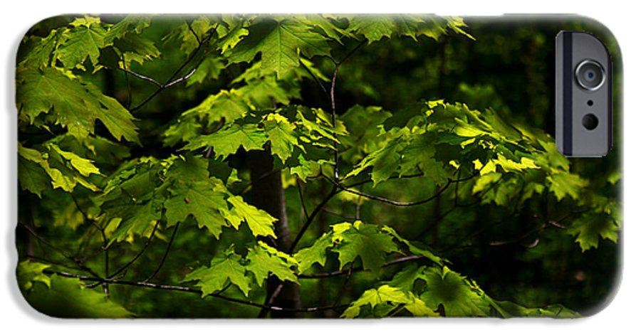 Forest IPhone 6 Case featuring the photograph Forest Shades by Randy Oberg