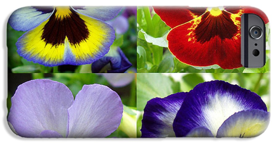 Pansy IPhone 6 Case featuring the photograph Four Pansies by Nancy Mueller