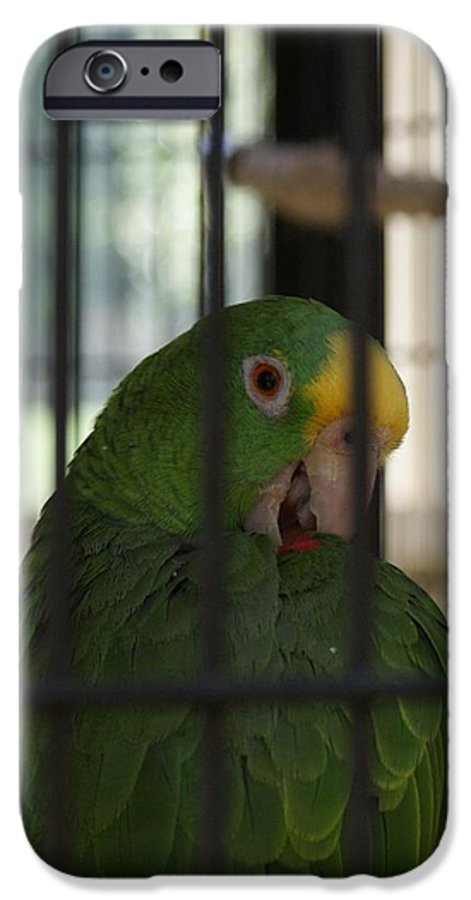 Parrot IPhone 6 Case featuring the photograph Framed by Shelley Jones