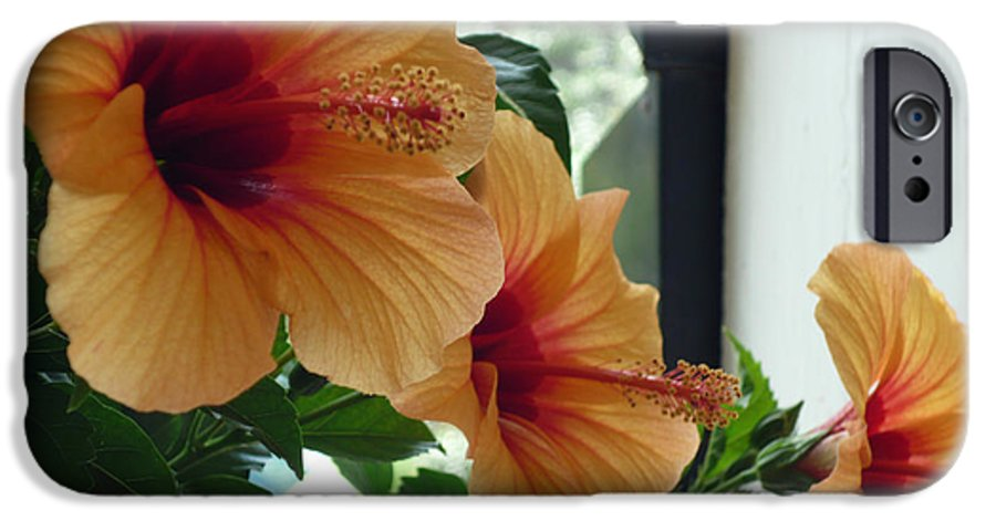 Photography Flower Floral Bloom Hibiscus Peach IPhone 6 Case featuring the photograph Friends For A Day by Karin Dawn Kelshall- Best