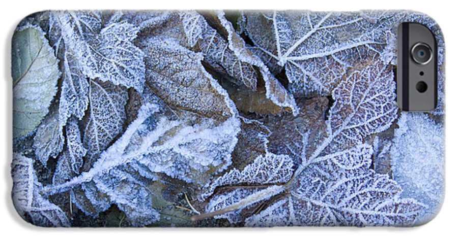 Frost IPhone 6 Case featuring the photograph Frost by Idaho Scenic Images Linda Lantzy