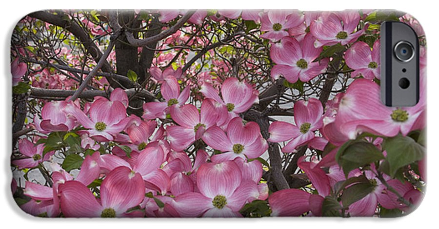 Dogwood IPhone 6 Case featuring the photograph Full Bloom by Idaho Scenic Images Linda Lantzy