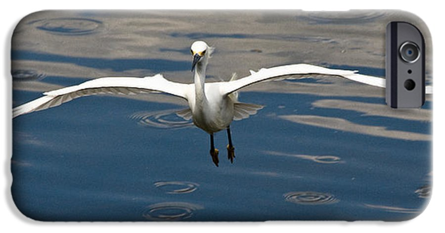 Snowy Egret IPhone 6 Case featuring the photograph Gear Down by Christopher Holmes
