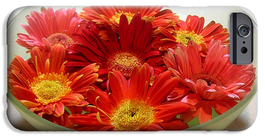 Nature IPhone 6 Case featuring the photograph Gerbera Daisies - A Bowl Full by Lucyna A M Green