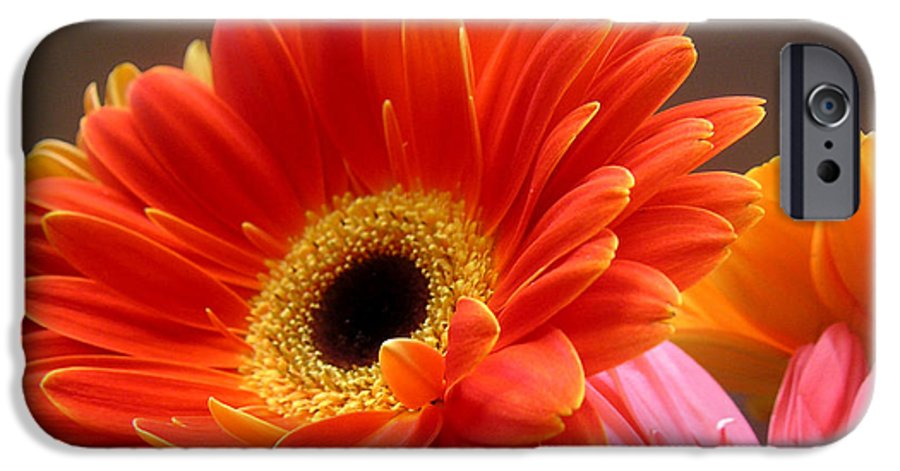 Nature IPhone 6 Case featuring the photograph Gerbera Daisies - Luminous by Lucyna A M Green