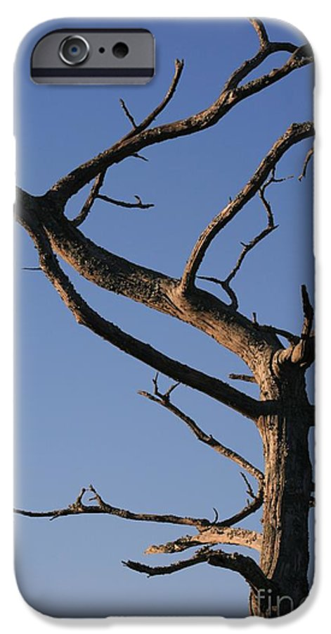 Tree IPhone 6 Case featuring the photograph Gnarly Tree by Nadine Rippelmeyer