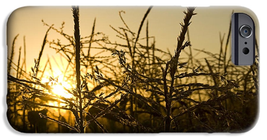 Golden IPhone 6 Case featuring the photograph Golden Corn by Idaho Scenic Images Linda Lantzy