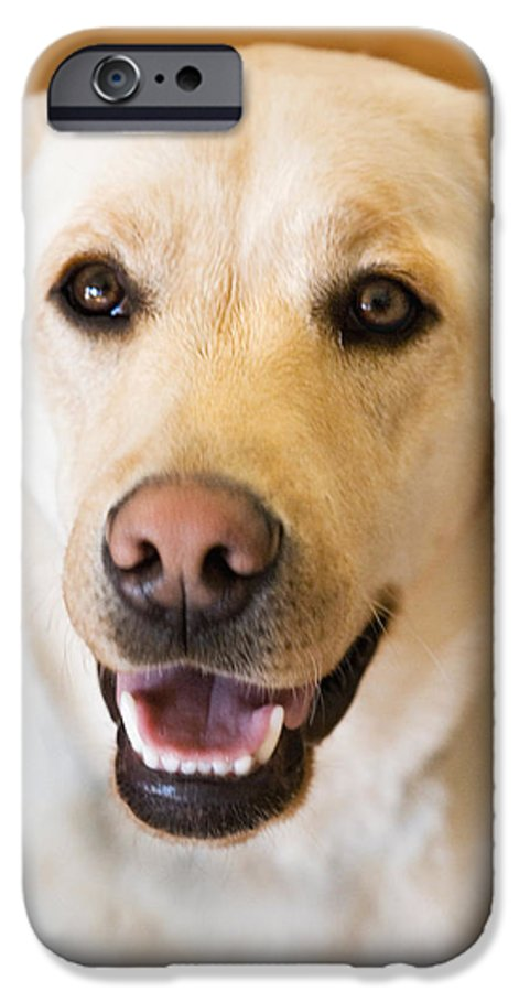 Lab IPhone 6 Case featuring the photograph Golden Lab by Marilyn Hunt
