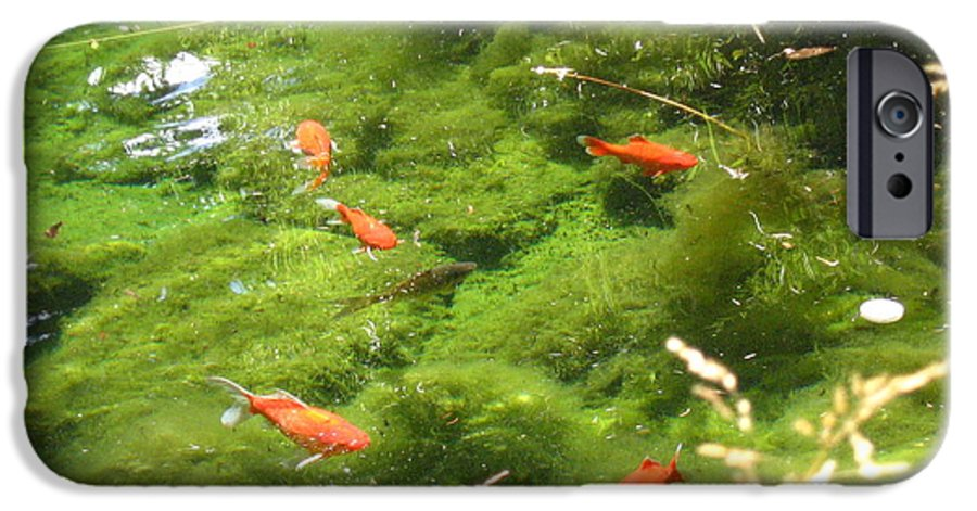 Goldfish IPhone 6 Case featuring the photograph Goldfish In A Pond by Melissa Parks