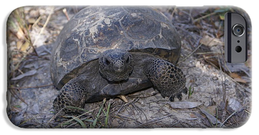 Turtle IPhone 6 Case featuring the painting Golpher Mom 2 by Debbie May