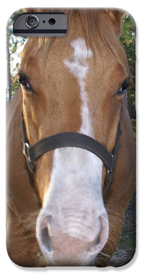 Horse IPhone 6 Case featuring the painting Got Sugar by Debbie May