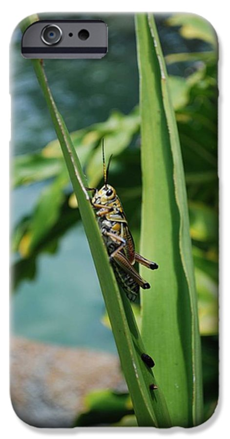Field IPhone 6 Case featuring the photograph Grasshopper by Margaret Fortunato