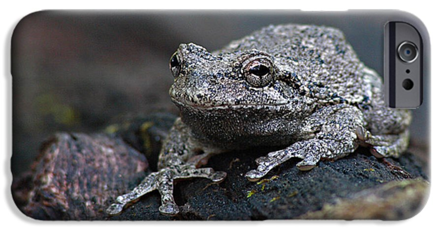 Frog IPhone 6 Case featuring the photograph Gray Treefrog On A Log by Max Allen