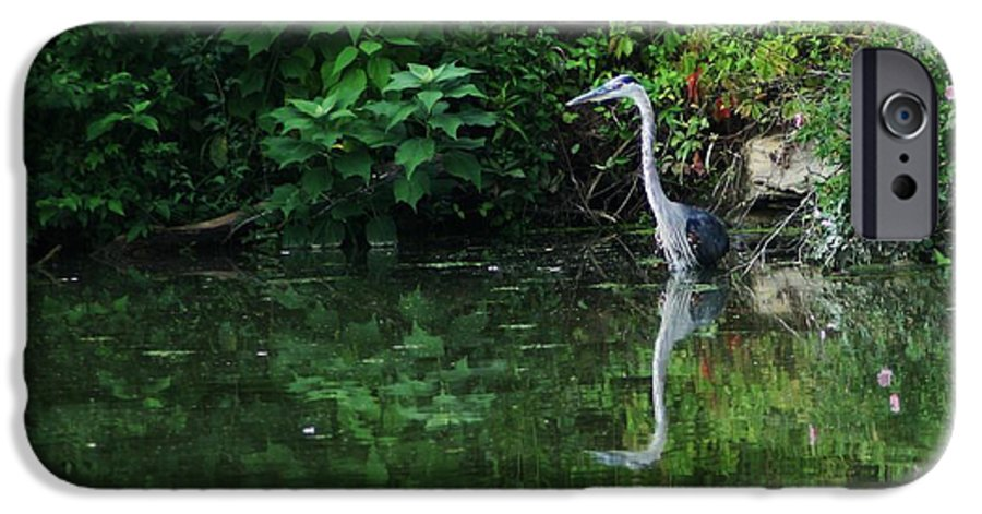 Lanscape Water Bird Crane Heron Blue Green Flowers Great Photograph IPhone 6 Case featuring the photograph Great Blue Heron Hunting Fish by Dawn Downour