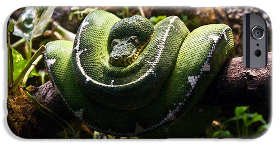 Green IPhone 6 Case featuring the photograph Green Boa by Douglas Barnett