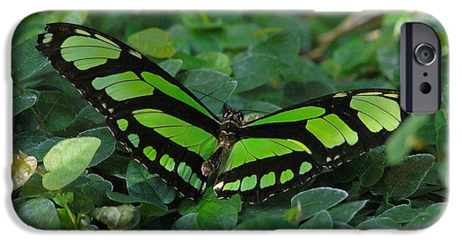 Green IPhone 6 Case featuring the photograph Green Butterfly by Louise Magno