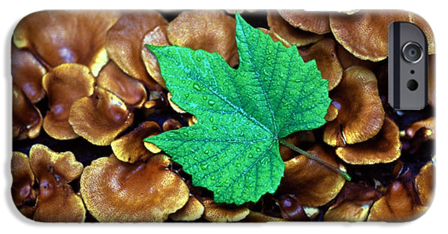 Nature IPhone 6 Case featuring the photograph Green Leaf On Fungus by Carl Purcell