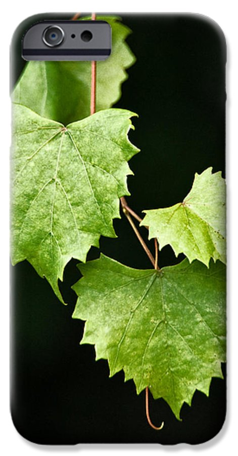 Flora IPhone 6 Case featuring the photograph Green Leaves by Christopher Holmes