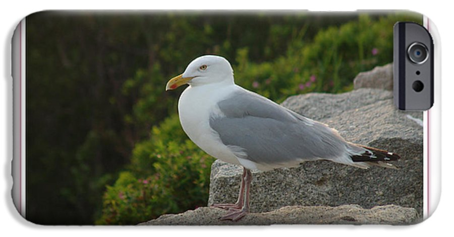 Landscape IPhone 6 Case featuring the photograph Gull Able by Peter Muzyka
