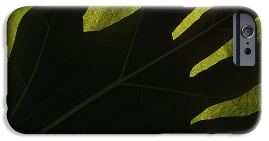 Hand IPhone 6 Case featuring the photograph Hand And Catalpa Veins Backlit by Anna Lisa Yoder