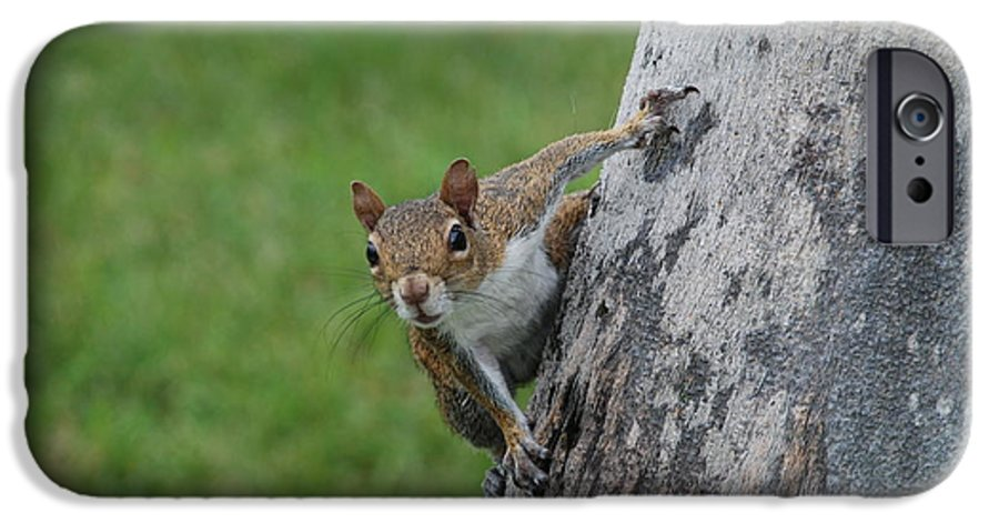 Squirrel IPhone 6 Case featuring the photograph Hanging On by Rob Hans