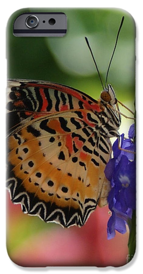 Butterfly IPhone 6 Case featuring the photograph Hanging On by Shelley Jones
