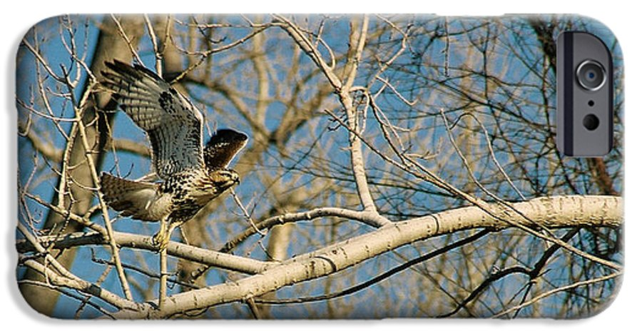 Hawk IPhone 6 Case featuring the photograph Hawk by Steve Karol