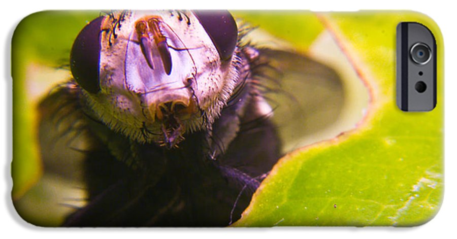 Fly IPhone 6 Case featuring the photograph Hi There by Douglas Barnett