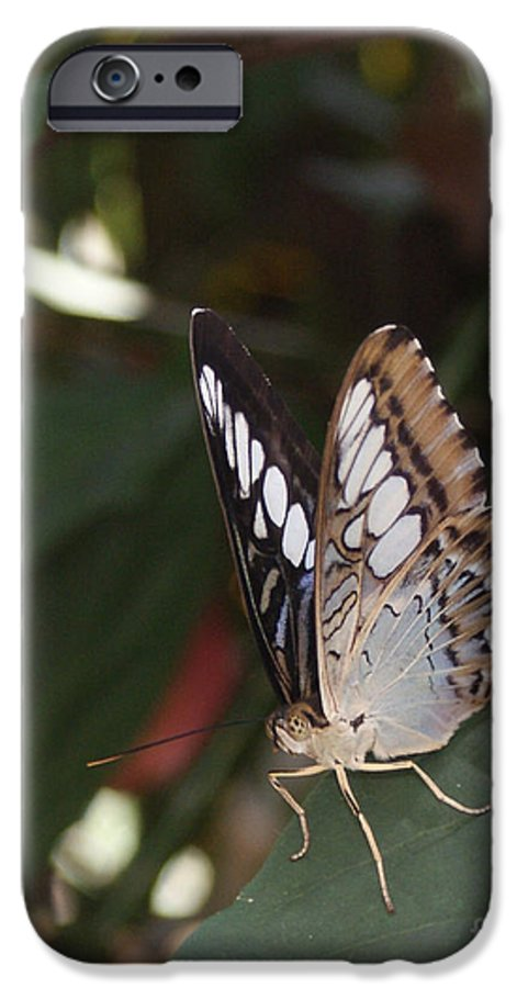 Butterfly IPhone 6 Case featuring the photograph Hints Of Blue by Shelley Jones