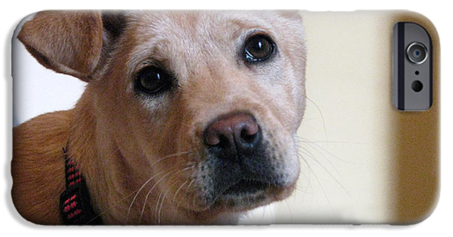 Dog IPhone 6 Case featuring the photograph Honey by Amanda Barcon