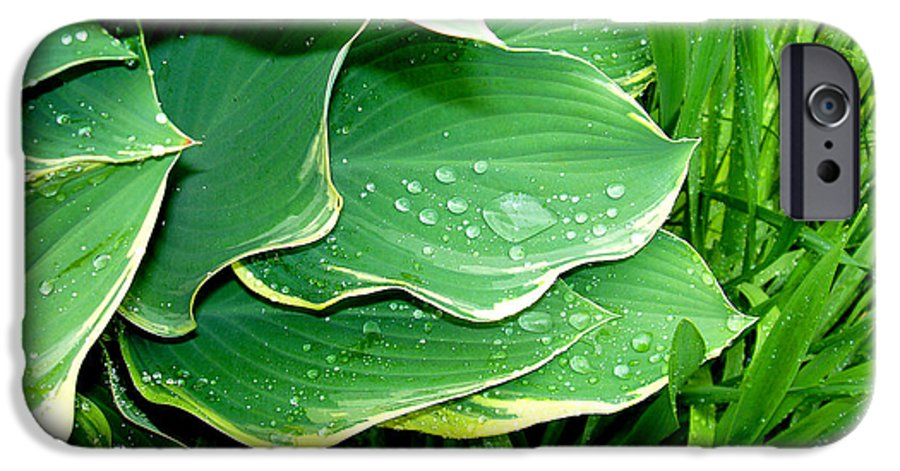 Hostas IPhone 6 Case featuring the photograph Hosta Leaves And Waterdrops by Nancy Mueller