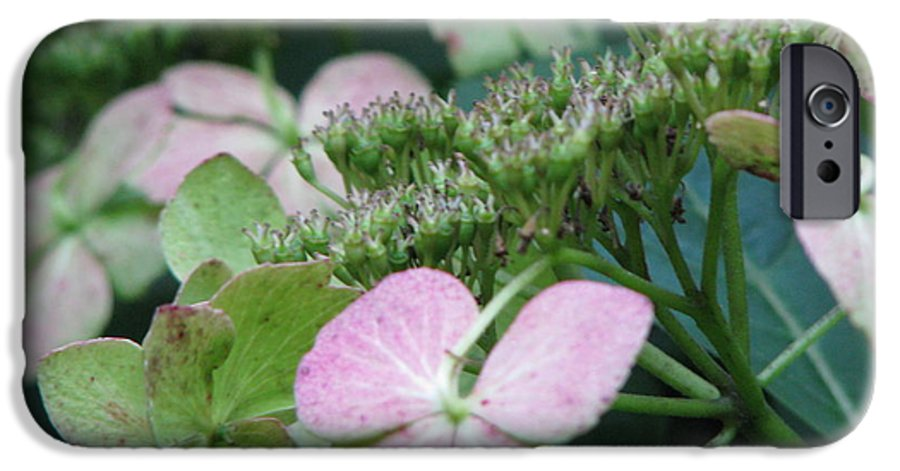 Hydrangea IPhone 6 Case featuring the photograph Hydrangea by Amanda Barcon