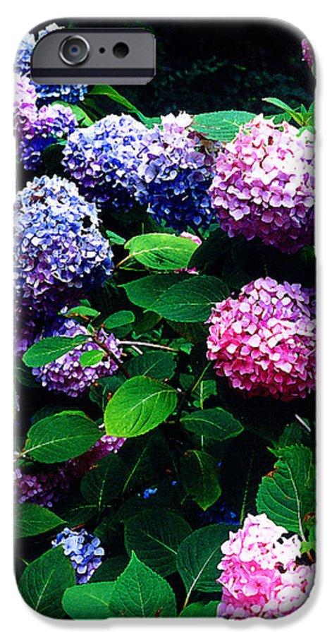 Flowers IPhone 6 Case featuring the photograph Hydrangeas by Nancy Mueller
