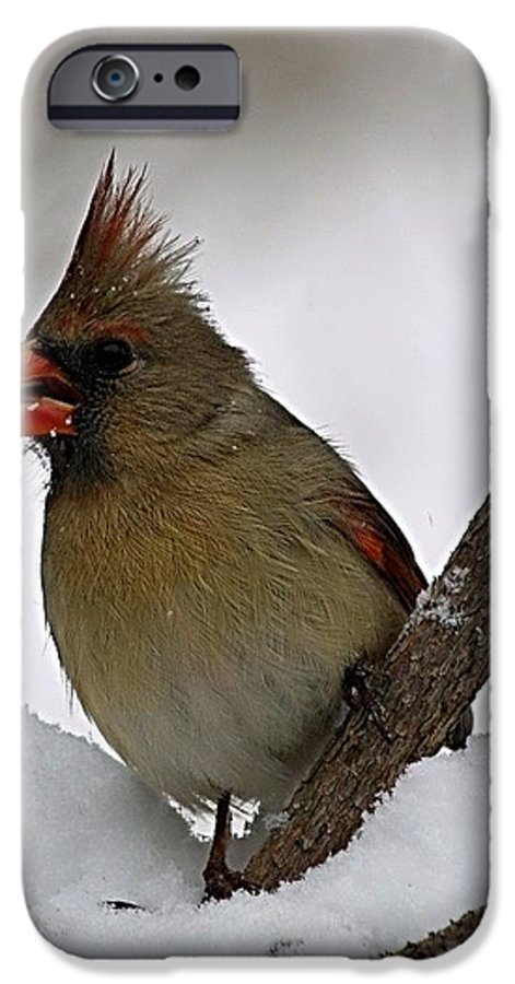 Bird IPhone 6 Case featuring the photograph I Love Seeds by Gaby Swanson