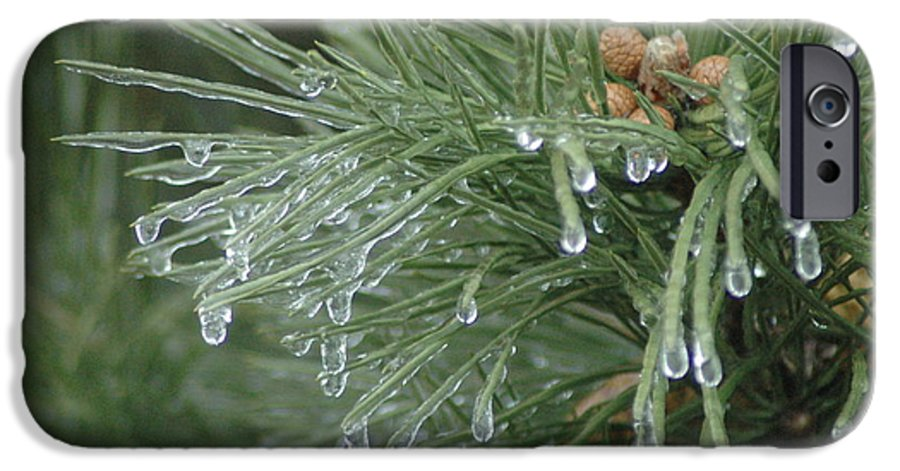 Nature IPhone 6 Case featuring the photograph Iced Pine by Kathy Schumann