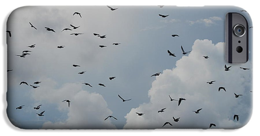 Birds IPhone 6 Case featuring the photograph In Flight by Rob Hans